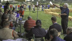 A scene from last week's Central Route Trading Mixed Sale. (Wayne Marks).