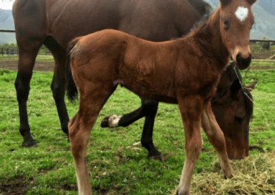 Antonias Glory and 9 day old foal