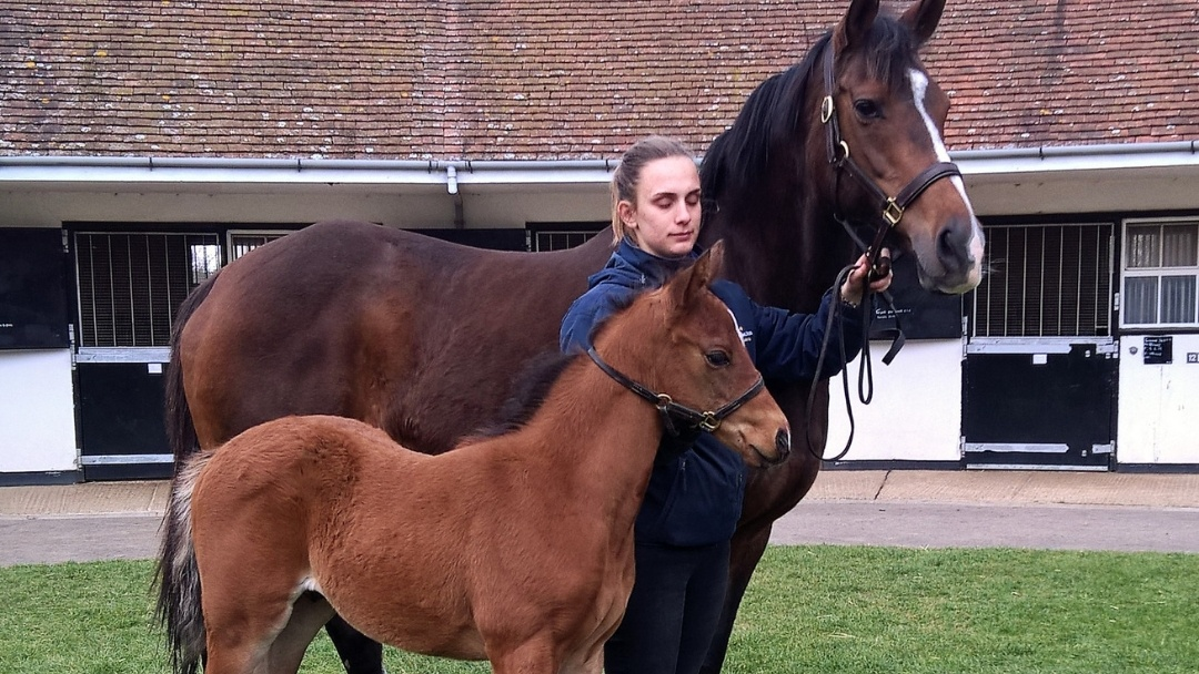 Breeding - 6 weeks old Poet's Voice colt with proud mum