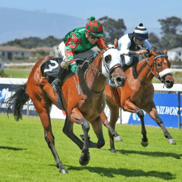 Bushy Park wins for Hintlesham Racing in Cape Town