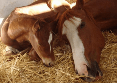 Mare and new foal taking it easy