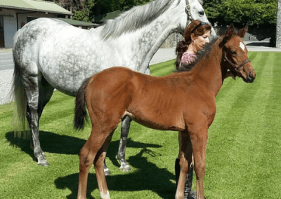 Megaspiel by Singspiel shows off her War Command Filly