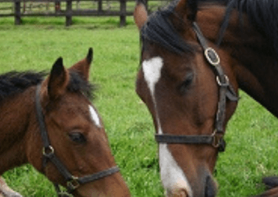 Mother by top broodmare sire Saddler's Well and daughter