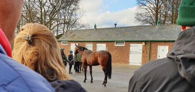 FRENCH Derby winning son of Deep Impact STUDY OF MAN being shown having arrived to start his career at Lanwades Stud (D Allan).