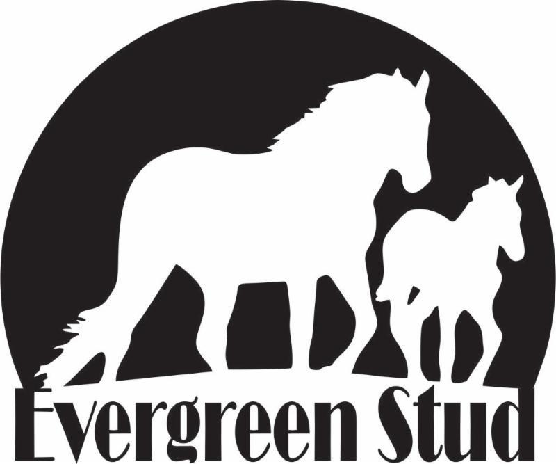 Evergreen Stud