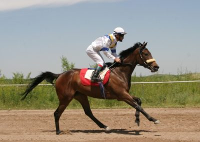Toll Road Gr1 Winner and Placed