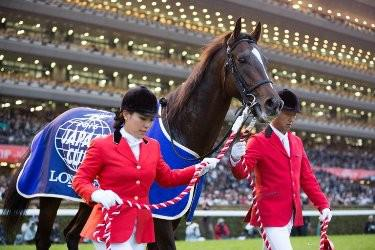 Kitasan Black 2016 Japan Cup Winner and Horse of the Year - 3rd yesterday.