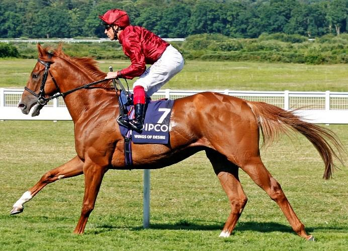 Wings of Desire by Pivotal, Dante Winner and 2nd to the wonderful Highland Reel in the King George. Stands at Heversham Park Stud.