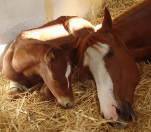 Sunnydale and foal