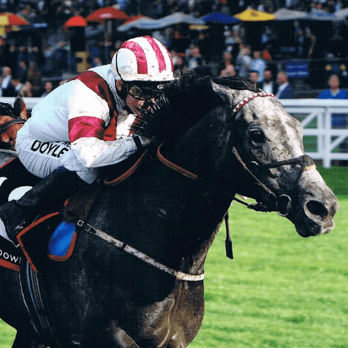 Hollie Doyle a star of the future drives Ice Lord home at Ascot