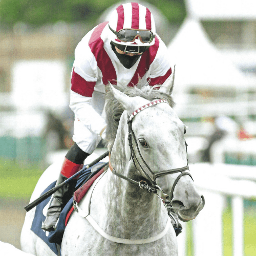 Ice Lord at Doncaster