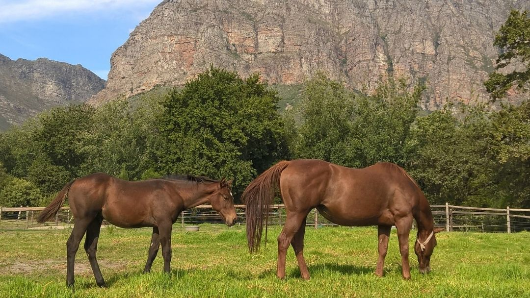Paarl Stud Farm - Mature Shelter and mountain backdrops