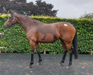 Pivotal mare ex Galileo mare in foal to Dutch Art bought by AllanBloodlines in the rain