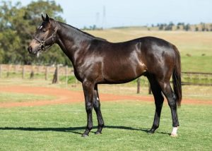 Lot 95 Colt 18Early Spring