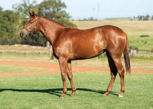 Lot 15 Filly 18Joan of Arc