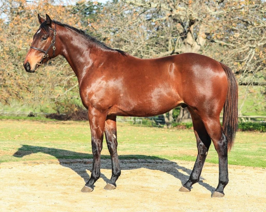 Burning Wings at HnA Stud before a sale