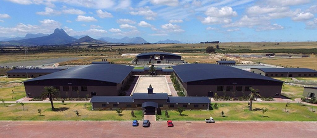 Cape Yearling Sale – Lots To Bid For
