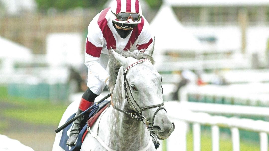 ICE LORD pictured at Wolverhampton