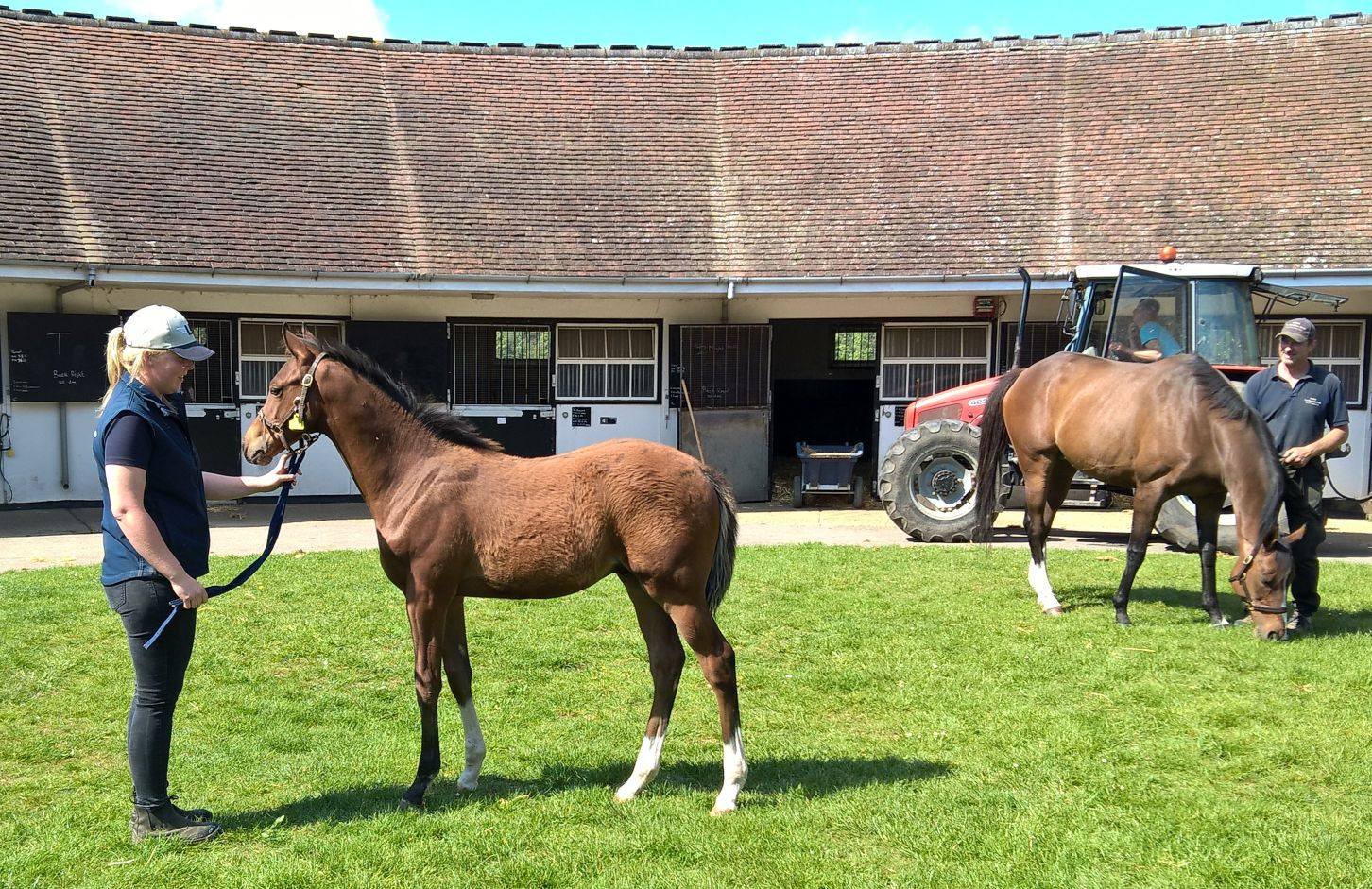 Rodolfo as a foal at The National Stud